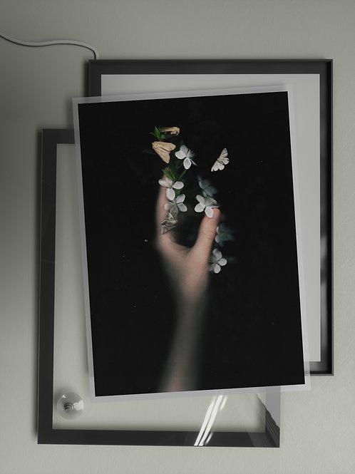 Cherry Blossom | Film Insert