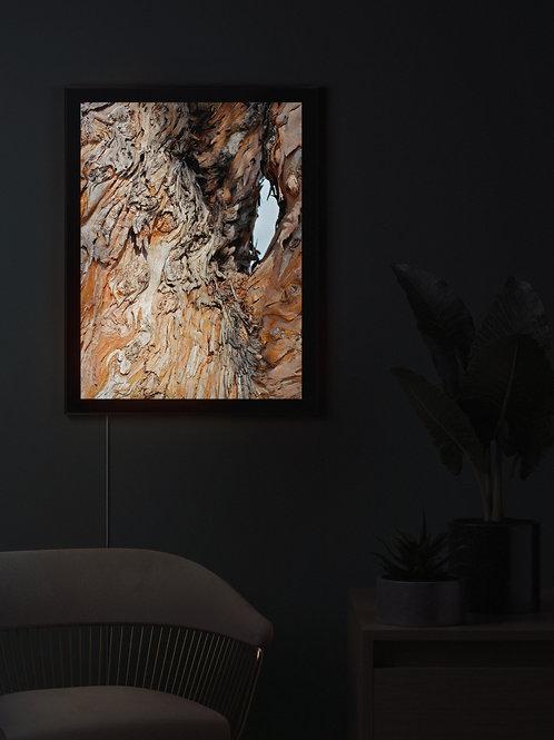 Untitled | Lightbox