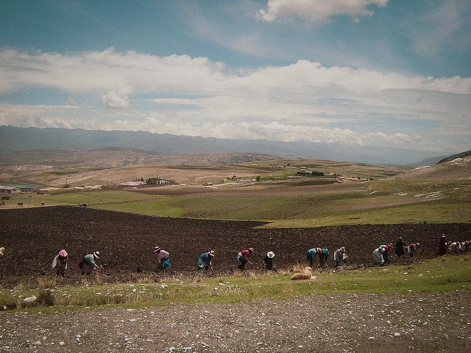 Quinoa farmers in Peru farming superfoods