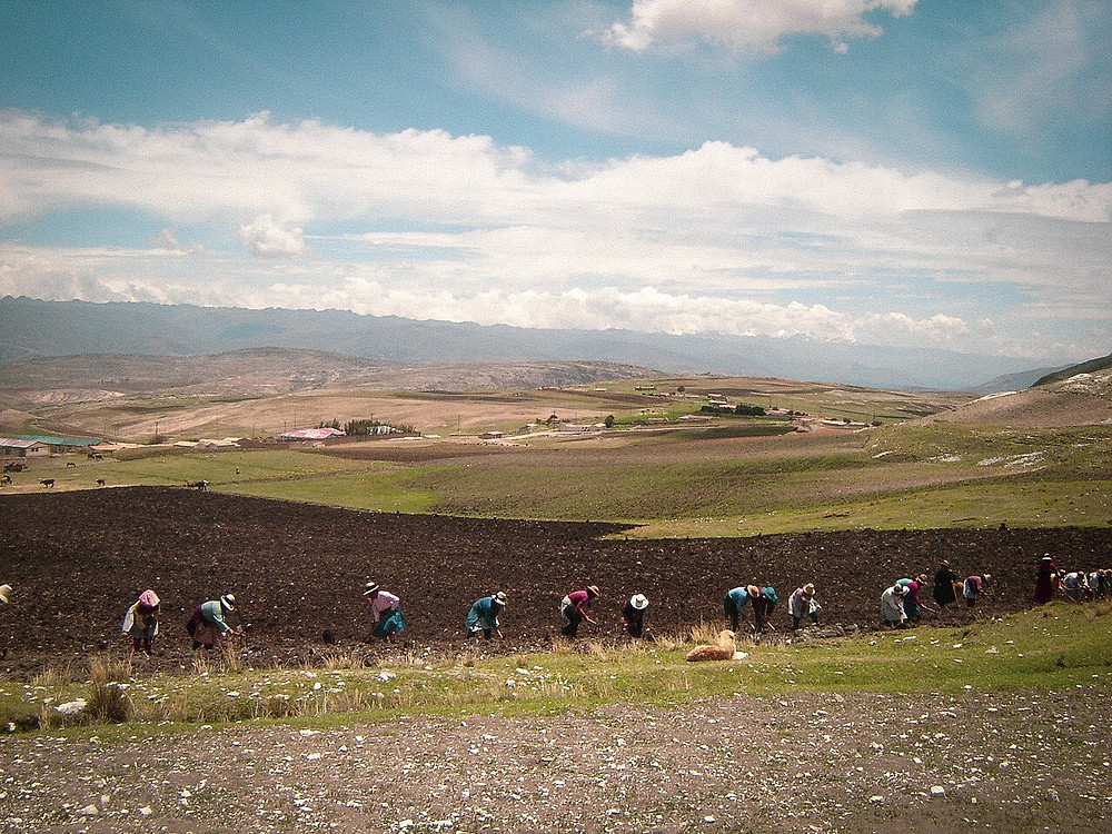 Super Seed International provides jobs and financial security to Andean farmers