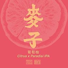 葡萄柚 IPA Citrus x Paradisi IPA