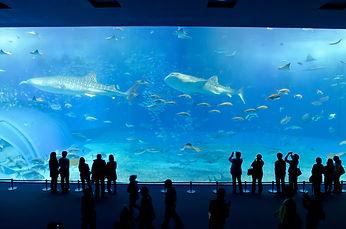 水族馆.jpg