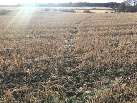 Deer Paths