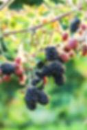 248 sign & blackberries-7.jpg