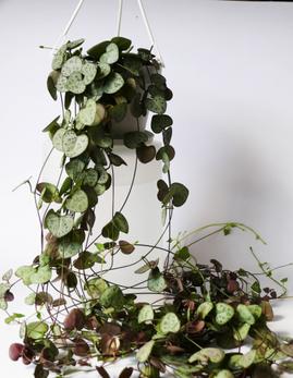 Stage Fleuriste Plantes