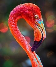 Flamingo Beauty_.jpg