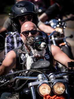 180701 Harley Davidson small-09280