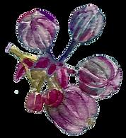 flor 11.png