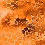 brd_bushwolf_orange.jpg