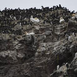 Bird Rock.jpg