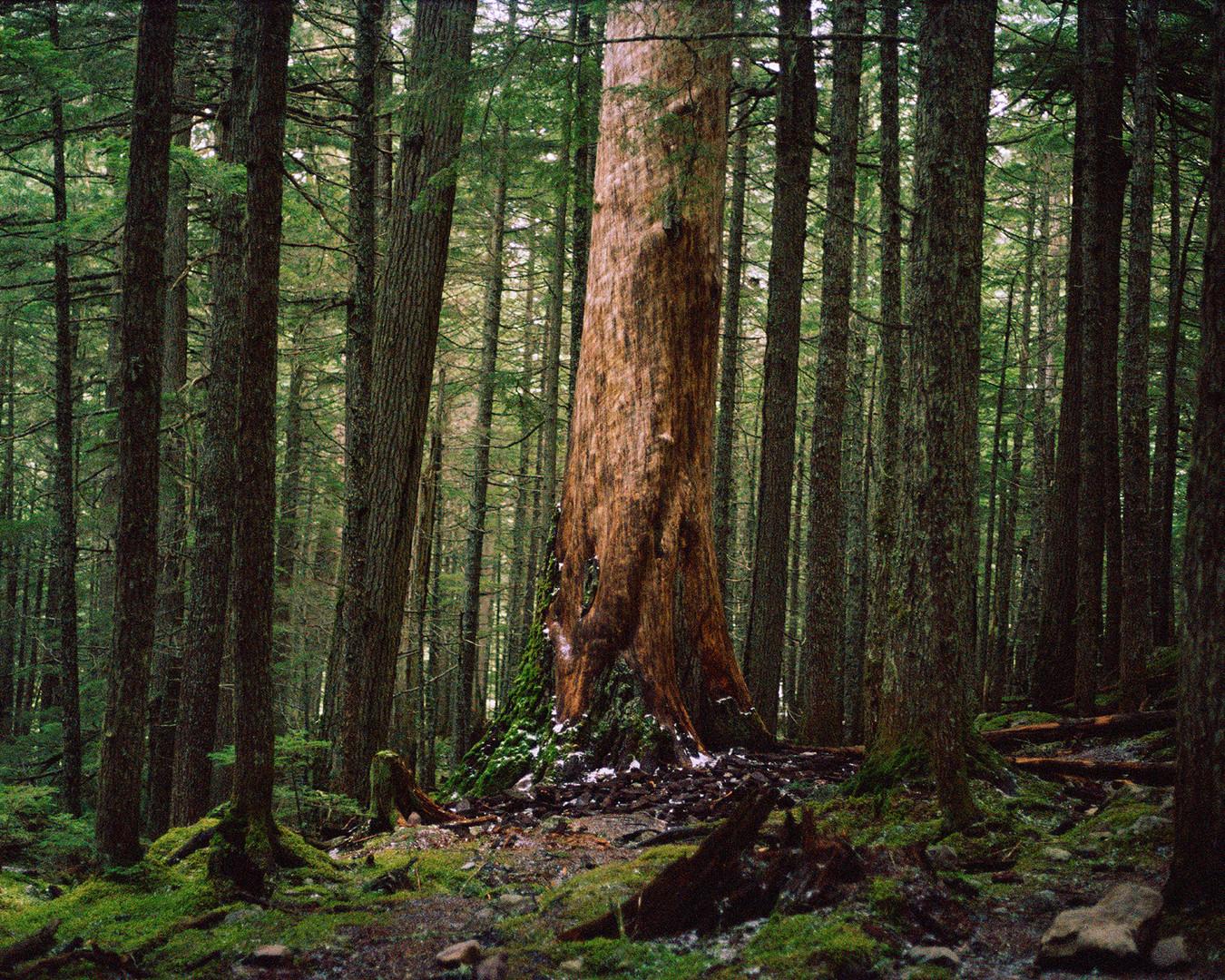 Megan Mullins Photography in Glacier National Park