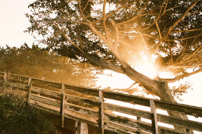 Megan Mullins Photography in Carmel by the Sea, CA