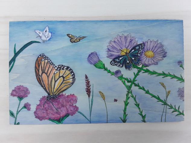 Papillons - 10€