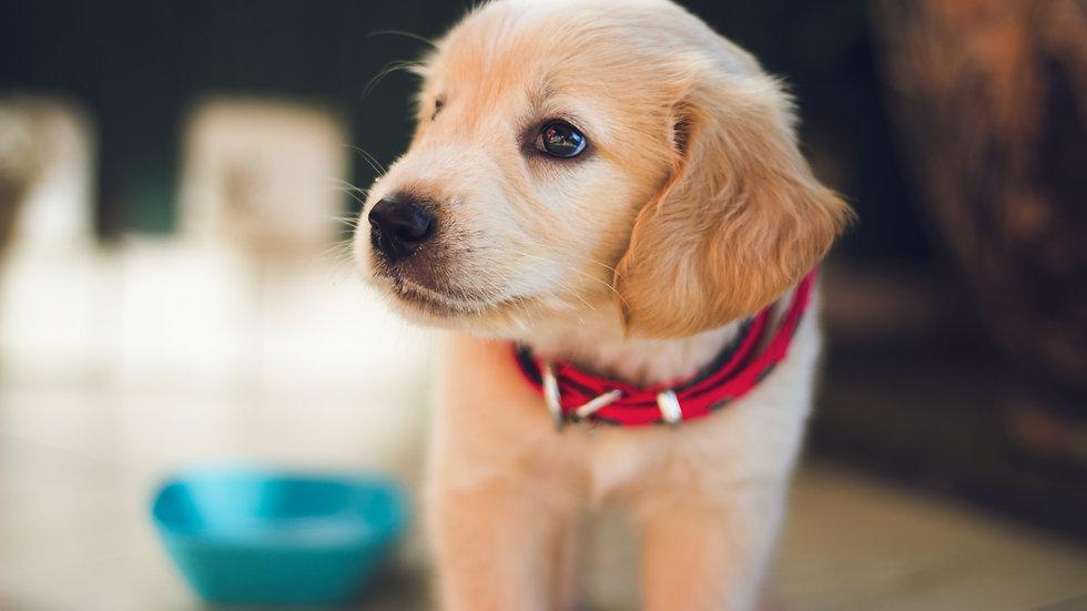 Puppy Junior