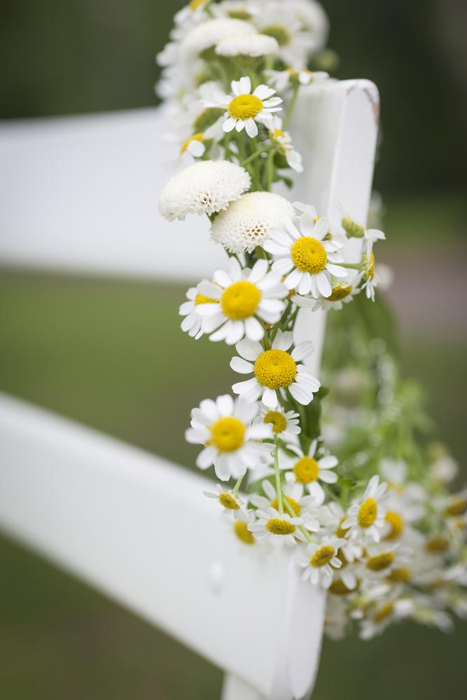"""Fotostrecke """"Wiesenblumen"""""""