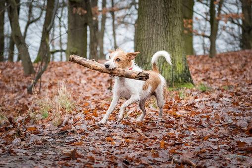 Hund_Hund_Kommastrich-4260.jpg