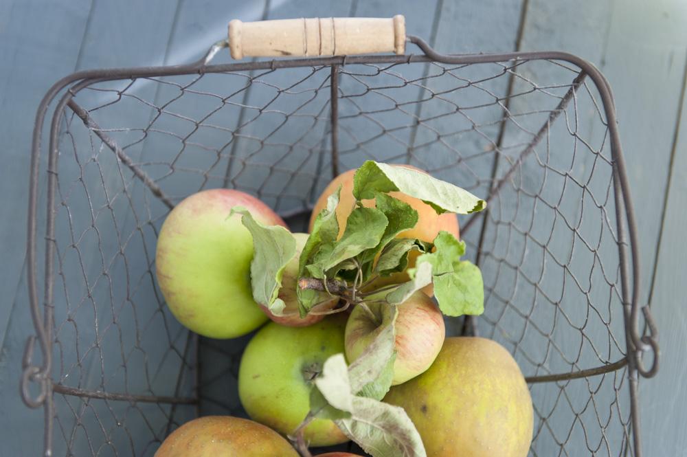 Apfel-Korb-Herbst