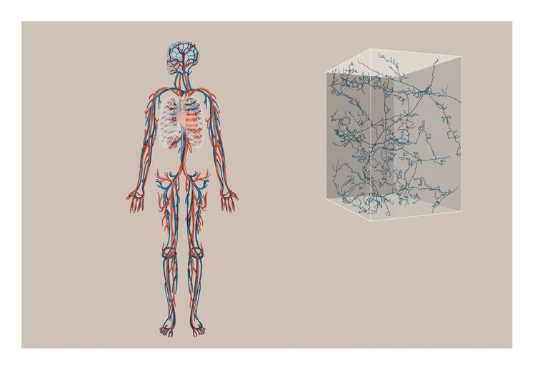 Anne-Mair-Agrarnetz-Mensch-Blutkreislauf