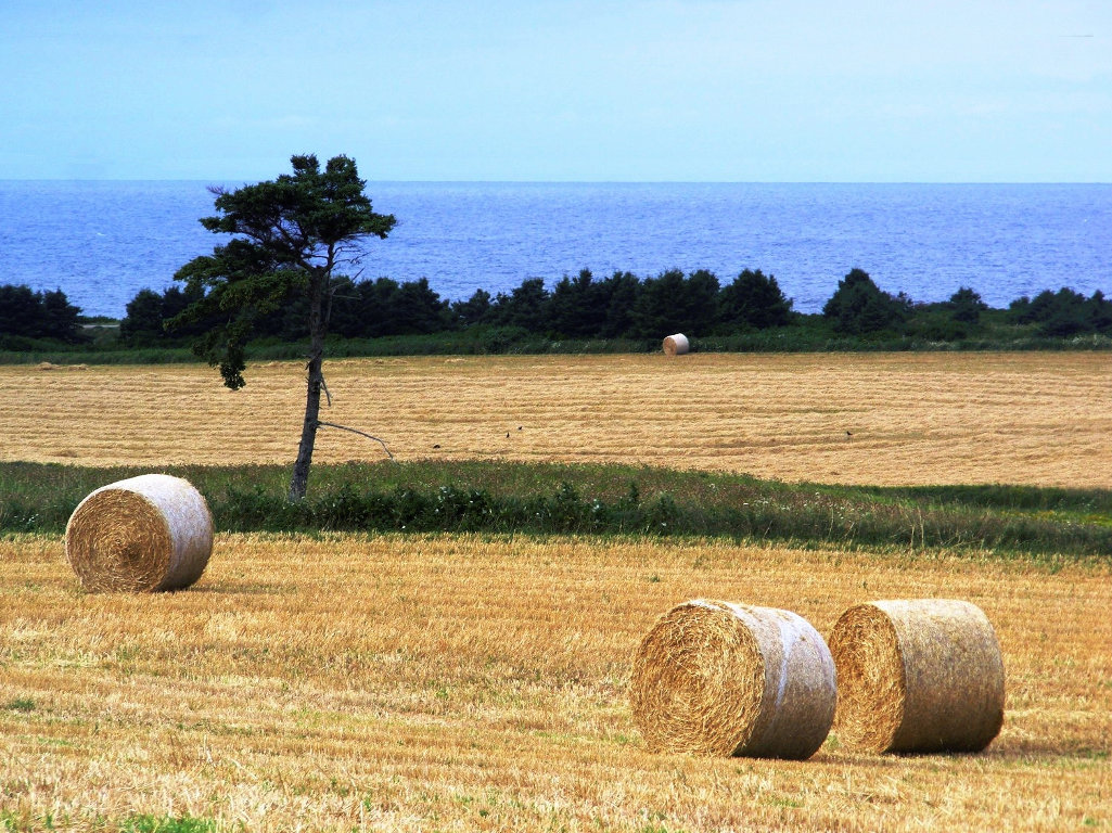 Farmland by the sea