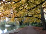 Autumn Tree by Amanda Harwood