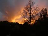 Sunset by Brenda Fox