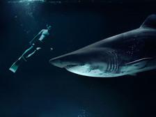 Bolsonaro Sangrando À Deriva Em Um Mar De Tubarões