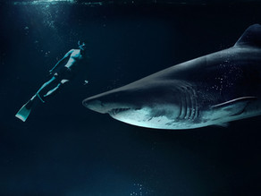 Great White Shark Diving with James Stewart