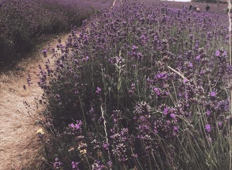 Lavender: A Poloroid Series