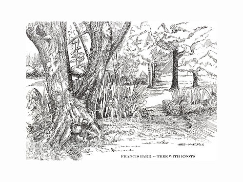 KNOTTY OLD TREE NEXT to BRIDGE- FRANCIS PARK