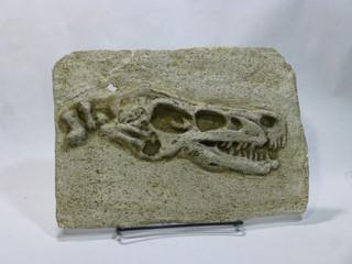 Raptor:  Velociraptor.