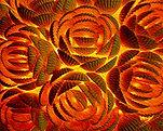 Flaming Rose 2.jpg