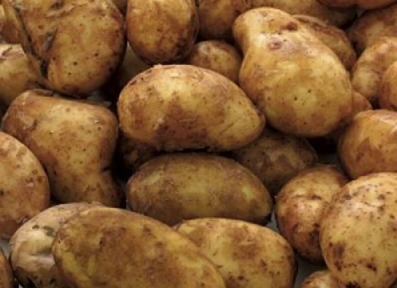 Rectory Farm Potatoes