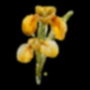 Желтый цветок 2