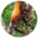 Amazon_Yasuni_1_ico.png
