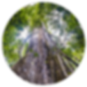 Amazon_Cuyabeno_3Days_2_ico.png