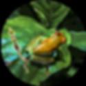 Amazon_Cuyabeno_3Days_1_ico.png