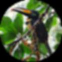 Amazon_Yasuni_4_ico.png