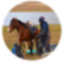 Trekking_DelCondor_3_ico.png