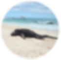 Galapagos_Overview_ico_01.png