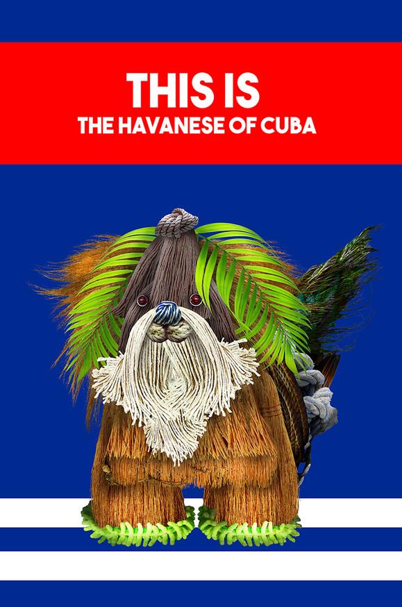 Cuba_Havanese.jpg