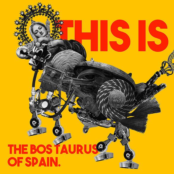 Spain_Bos taurus.jpg