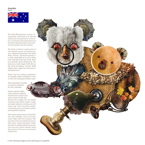 Australia_Koala