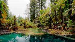 Redwood-Forest Rotorua