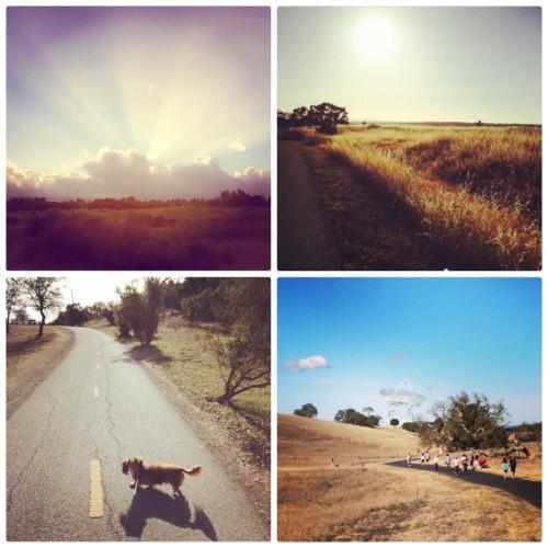 Photo collage of California sun