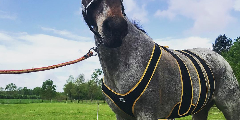 Kennismaking Praktische EHBO bij paarden