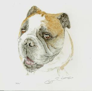 Bulldog%201500p_edited.jpg