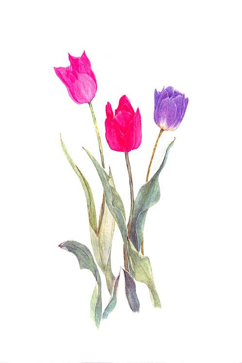 Tulip Delight (BP-0014)