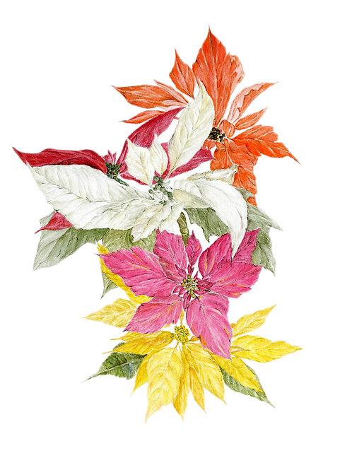 Mini-Print: Poinsettias