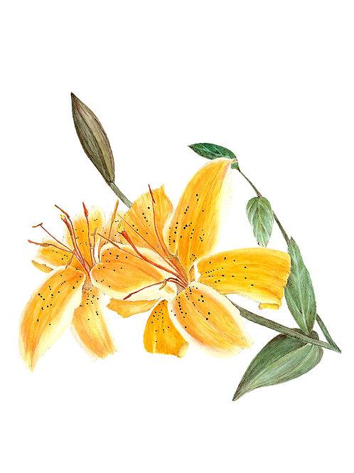 Tiger Lily (BP-0046)