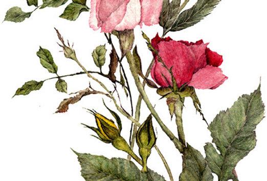 Romance Bouquet (BP-0013)